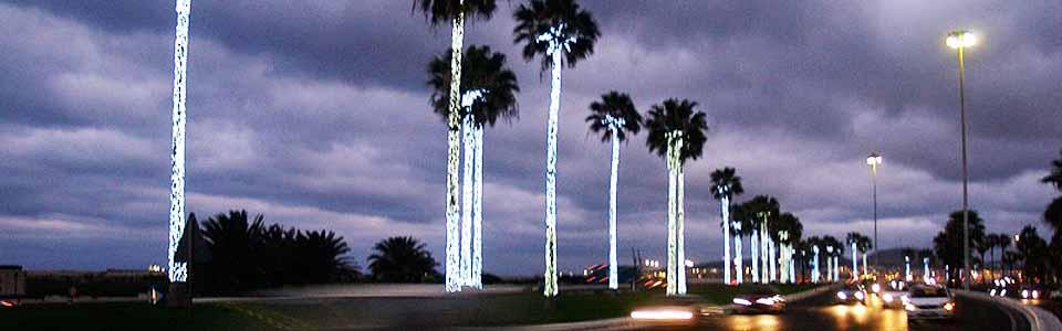 palmeras nocturnas wide cc