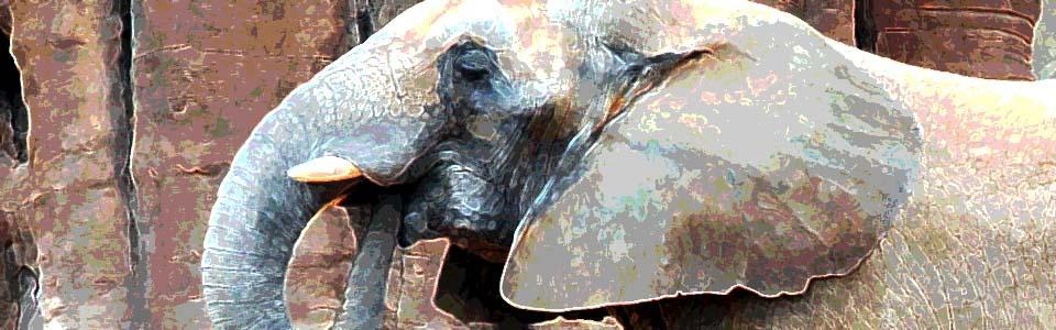 Elefante_wide_color
