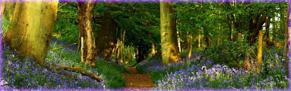 Sendero bosque_wide_color