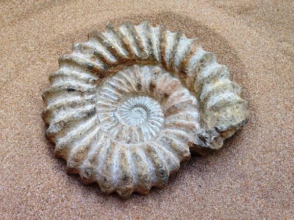 Exposición 'Fósiles de Souss Massa Drâa, un pasado bajo el mar'